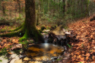 Deep Forest Creek Art Print by Rich Leighton
