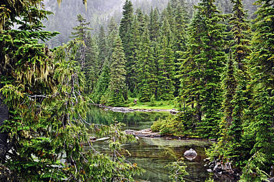 Photograph - Deep Forest Pond by Tikvah's Hope