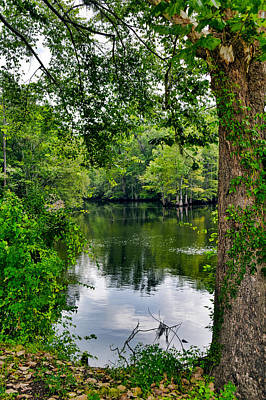 Photograph - Deep Green Peace by Linda Brown