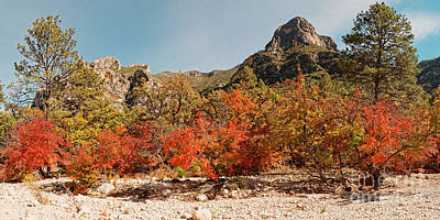 Photograph - Deep In Mckittrick Canyon - Lost Maples And Ponderosa Pines Against Backdrop Of Guadalupe Mountains  by Silvio Ligutti