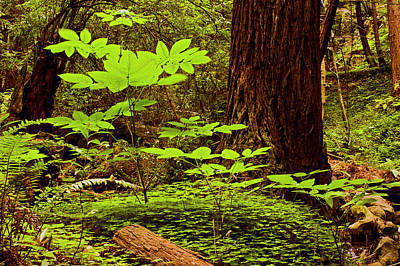 Photograph - Deep In The Forest-lime Klin by Gary Brandes