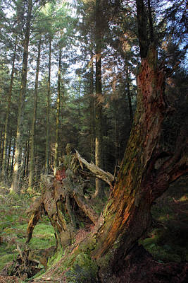 Woodland Photograph - Deep In The Forest by Phil Tomlinson
