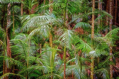 Print featuring the photograph Deep In The Forest, Tamborine Mountain by Dave Catley