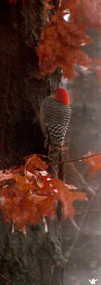 Deep In The Forest Woodpecker Art Print by Debra     Vatalaro