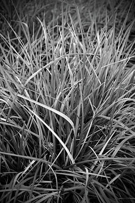 Photograph - Deep In The Grass by Cate Franklyn