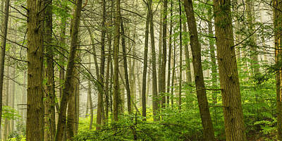 Photograph - Deep In The Misty Forest by Mark Robert Rogers