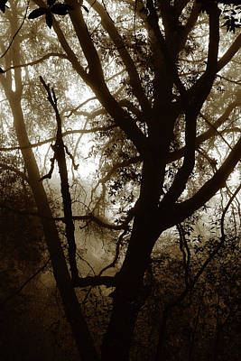 Photograph - Deep In The Sequoia National Forest by Ayasha Loya