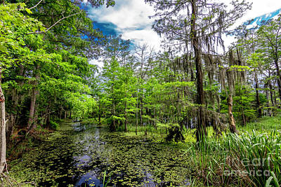 Photograph - Deep In The Swamp by Ken Frischkorn
