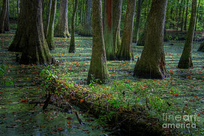 Deep In The Swamp Art Print by Larry Braun