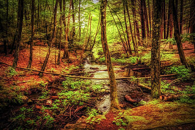 Photograph - Deep In The Woods Of New England by Lilia D