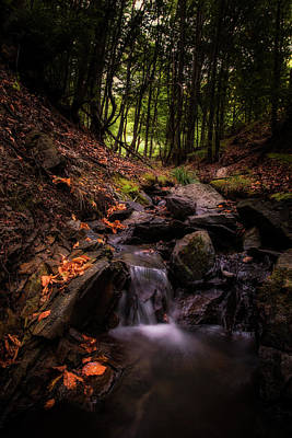 Photograph - Deep In The Woods by Plamen Petkov