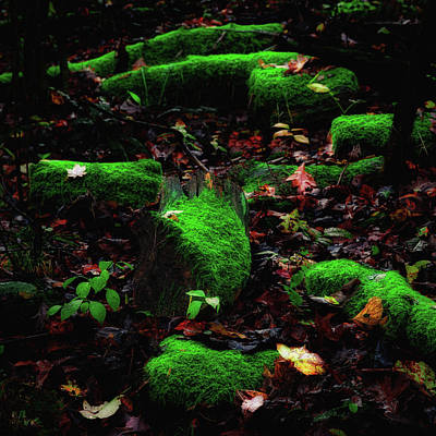 Deep In The Woods Art Print