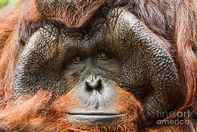 Deep In Thought Art Print by Jamie Pham