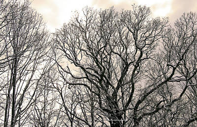 Photograph - Deep In Winter Trees by Mark Alesse