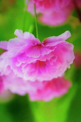 Deep Pink Blossoms Art Print