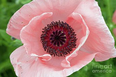 Photograph - Deep Pink by Jim Gillen