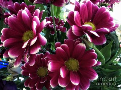 Photograph - Deep Red Flowers by Joan-Violet Stretch