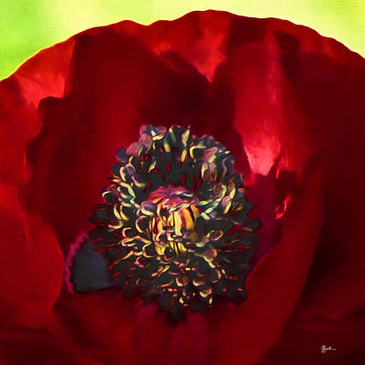 Photograph - Deep Red Poppy by TK Goforth