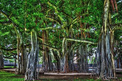 Photograph - Deep Roots Banyan Trees Thomas Square Honolulu Oahu Hawaii Collection Art by Reid Callaway