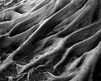 Tree Roots Photograph - Deep Roots by David April