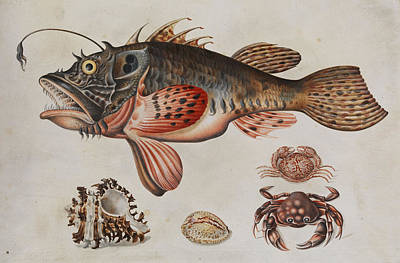 Grasshopper Painting - Deep-sea Fish, Crabs And Sea Snails by Maria Sibylla Merian