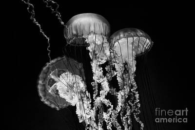 Photograph - Deep Sea Lanterns by Mimi Ditchie
