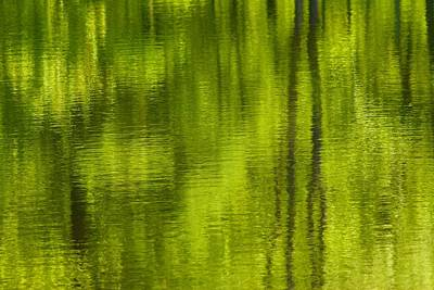 Photograph - Deep Summer Reflection by Polly Castor