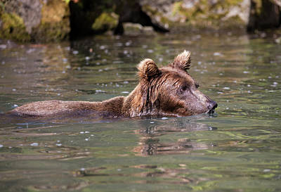 Photograph - Deep Swimming Bear by Gloria Anderson