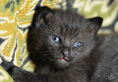 Photograph - Deep Thinking Kitten by Ally White