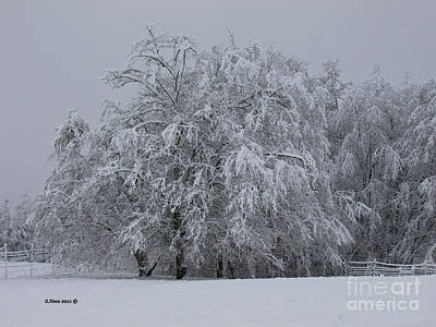 Photograph - Deep Winter by Shari Nees