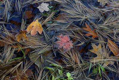 Photograph - Deep Within by Kathi Mirto