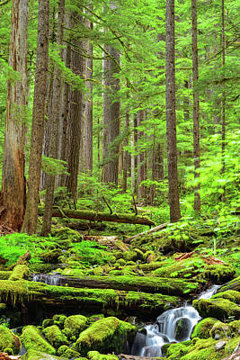 Photograph - Deep Woods by Spencer McDonald