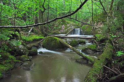Photograph - Deep Woods Stream 2 by Glenn Gordon