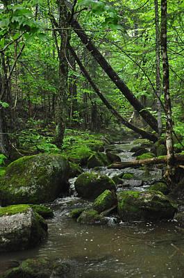 Glenn Shade Photograph - Deep Woods Stream 3 by Glenn Gordon