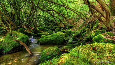 Photograph - Deep Woods Stream by Christopher Holmes