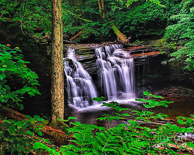 Photograph - Deep Woods Waterfall by Nick Zelinsky