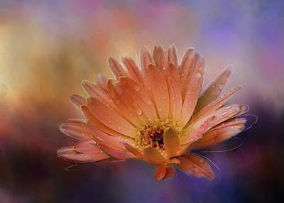 Gerber Daisy Mixed Media - Deeply Beautiful by Terry Davis