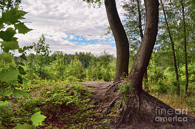 Photograph - Deeply Rooted  by Kerri Farley