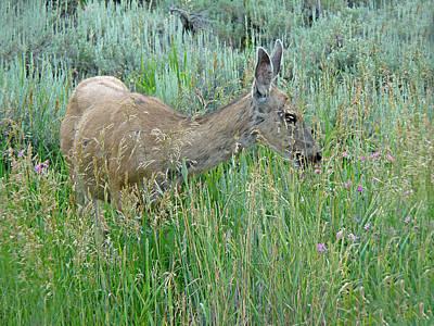 Photograph - Deer 1 by Diana Douglass