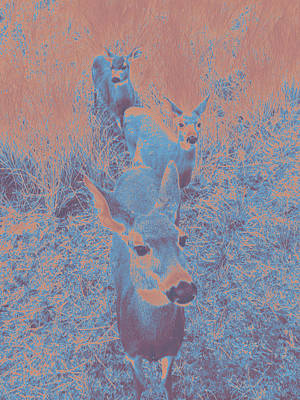 Photograph - Deer #10 by Anne Westlund