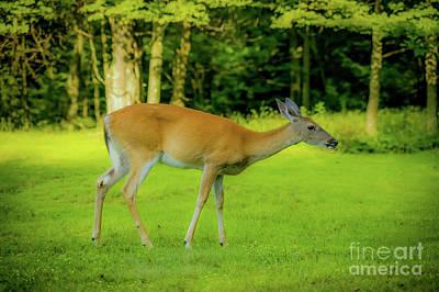 Photograph - Deer 1440g by Doug Berry