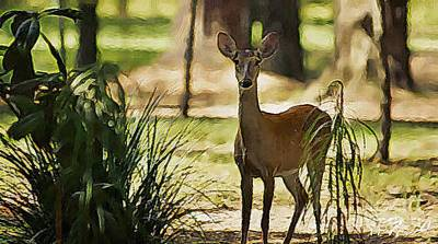 Photograph - Deer 2 by Paul Wilford