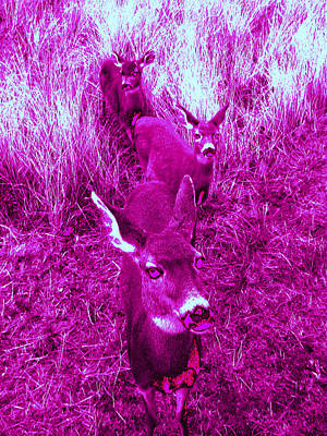 Photograph - Deer #4 by Anne Westlund
