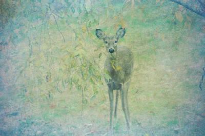 Dear Digital Art - Deer Abby by Bill Cannon