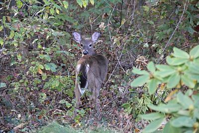 Photograph - Deer Alert by Allen Nice-Webb