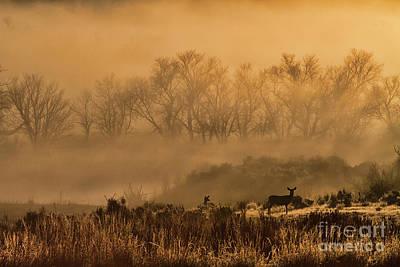 Photograph - Deer Along The Yampa by Jim Garrison