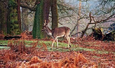 Dunham Massey Photograph - Deer Among The Ferns by Susan Tinsley