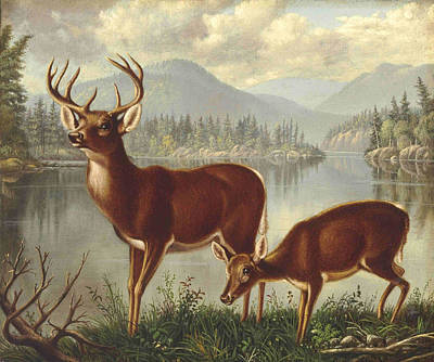 Deer And Doe Art Print by MotionAge Designs