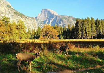 Half Dome Photograph - Deer And Half Dome by Sandy L. Kirkner