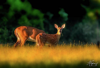 Photograph - Deer And Mother by Francisco Gomez